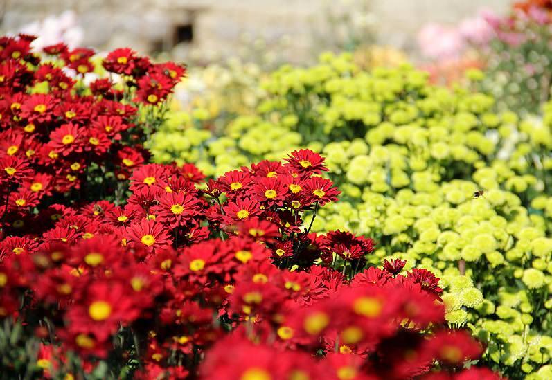 Сад в японском стиле отличается тем, что многолетники играют в нем второстепенную роль. Но есть ряд растений, которые должны обязательно присутствовать в нем