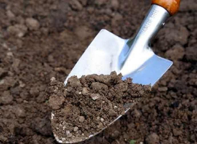 Правильно подготовленный грунт способствует более высокому проценту приживаемости и увеличивает всхожесть семян