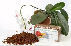 Самый доступный посадочный грунт для комнатных орхидей – сосновая кора
