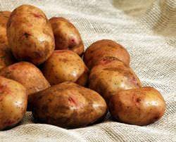 Картофель «Свитанок киевский» очень популярен