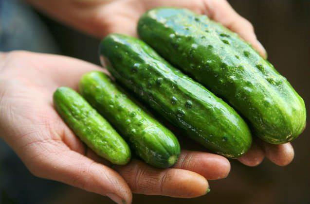 Чтобы хранить огурцы почти всю зиму без потери витаминов и вкуса, важно правильно выбрать сорт этих овощей