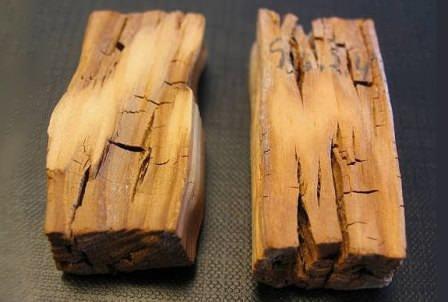 Защита древесины от плесени, грибка, гниения, насекомых и разнообразных микроорганизмов