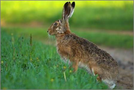 Вред от зайцев в саду непоправим, а потому постарайтесь спасти деревья!