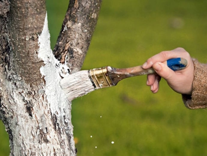 Используйте ограждения от зайцев, покраску деревьев, отвлекающие растения!