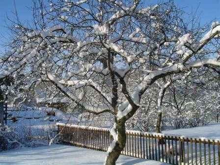 Зимний сад — одно из мест питания зайцев! Будьте осторожны!