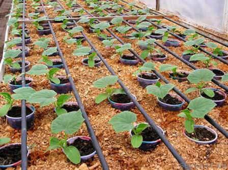 Заводим коммуникации в теплицу, устанавливаем освещение и формируем капельное орошение для растений