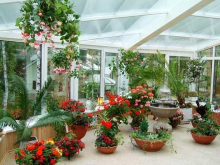 Подбор цветущих растений для зимнего сада – ответственная и трудоемкая работа