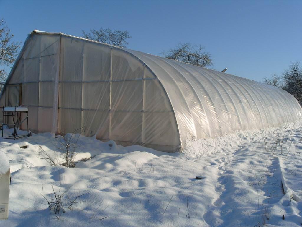 Строим теплицу, заранее определив вид растений для посадки