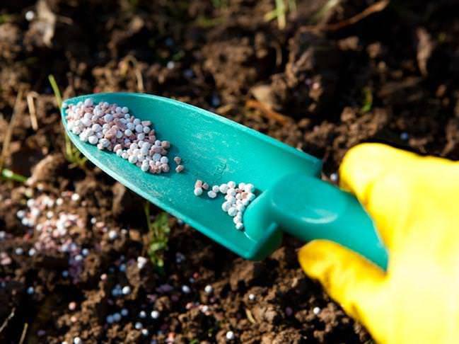 Рекомендуется вносить в землю комплексные удобрения, адаптированные под потребности садовой земляники
