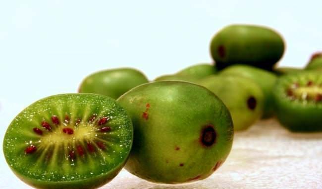 Плоды вызревшей актинидии имеют значительное количество минералов, витаминов и основных микроэлементов