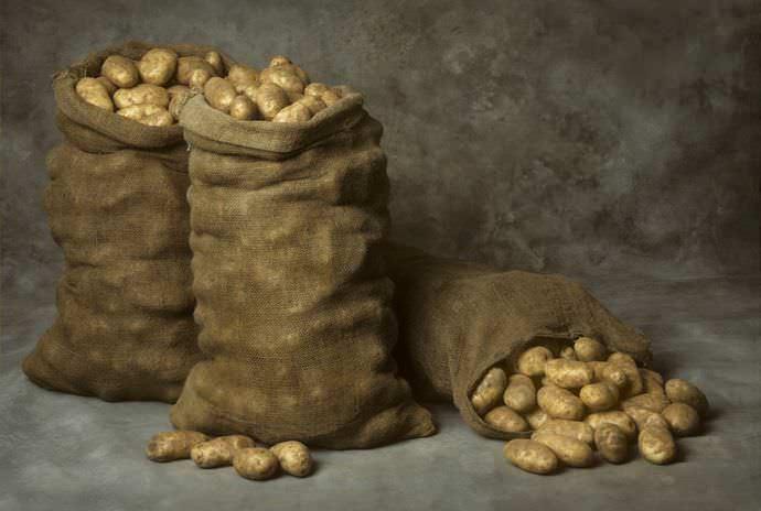 Для того чтобы ваш урожай картофеля благополучно долежал до весны или хотя бы до середины зимы, необходимо ему обеспечить полную темноту