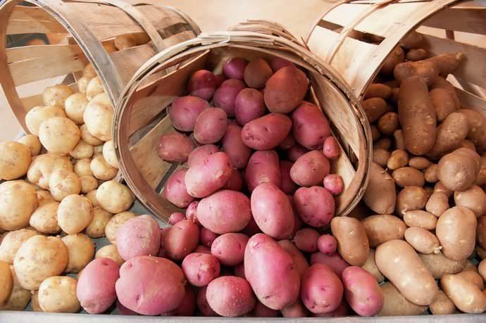В помещении, где хранится картофель, не должно быть сыро