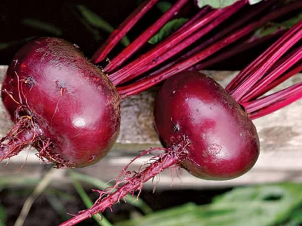 Очень часто огородники и овощеводы сибирского региона отдают предпочтение раннеспелым сортам