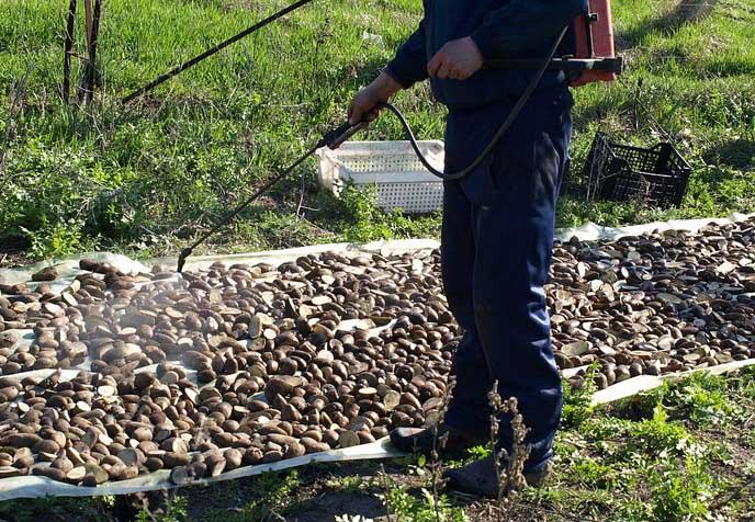 Престиж для обработки картофеля видео