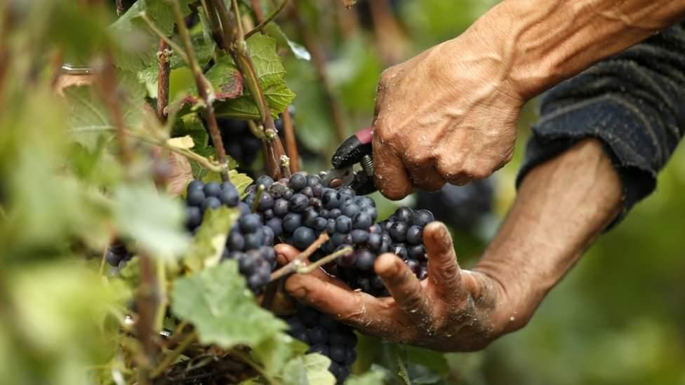 В октябре завершается уборка урожая