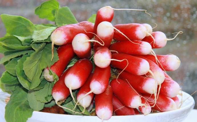 Для комнатных овощных «грядок» рекомендуется выбирать сорт Французский завтрак