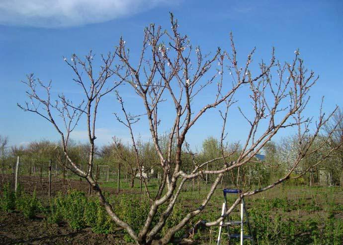 Обработка садовых деревьев весной от болезней и вредителей