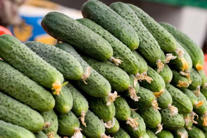 Гибридная новинка «Спино f1» характеризуется длительностью хранения собранных плодов