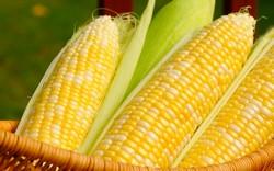 Консервирование кукурузы в початках – отличный способ обеспечить себя зимой этим полезным и вкусным продуктом