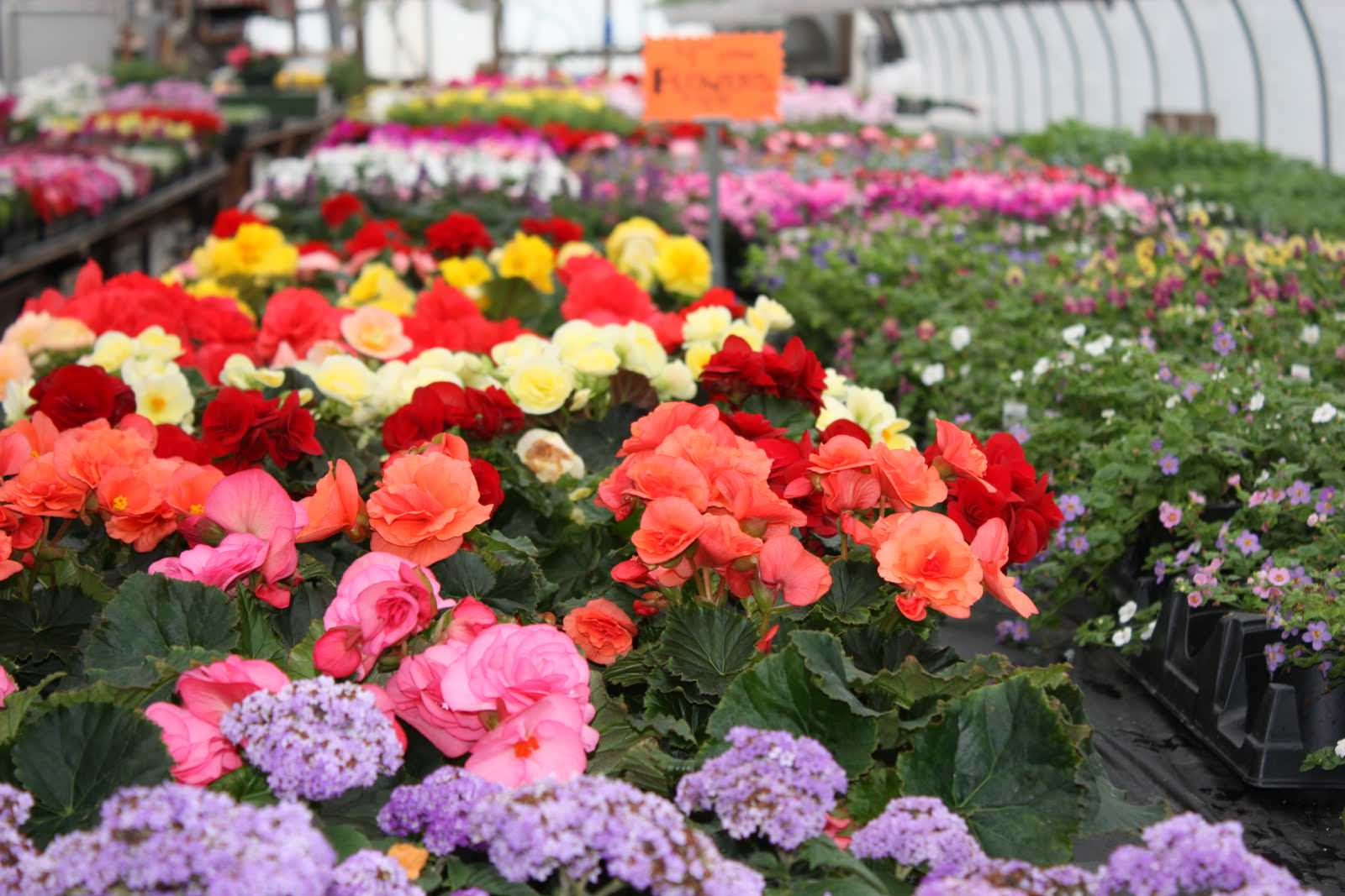 Чтобы бизнес процветал, нужно позаботиться о хороших сортах цветов