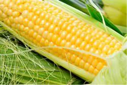 Консервация кукурузы в домашних условиях – несложное занятие