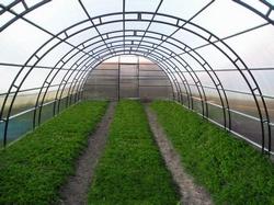 Благодаря тепличному бизнесу на овощах, зелени и цветах зимой можно неплохо заработать