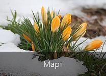Лунный календарь посадки растений в 2018 году