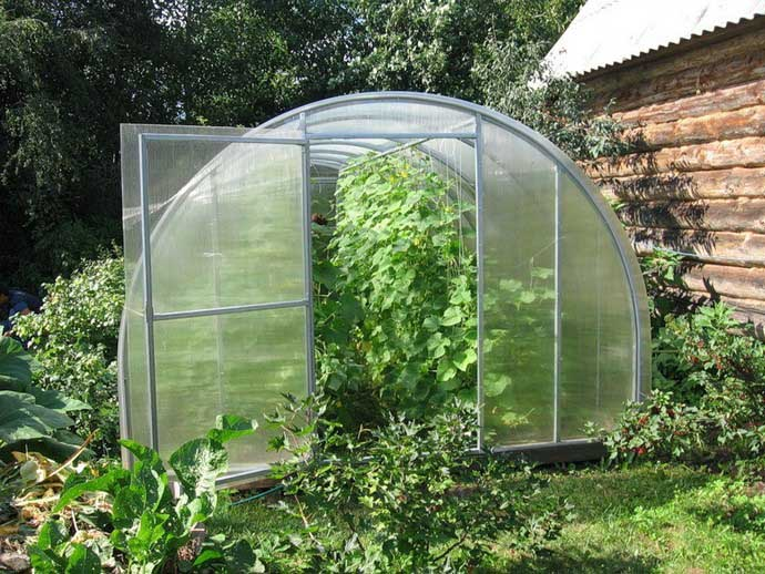 Огурцы сорта «Изумрудные сережки F1» рекомендуется выращивать в теплице