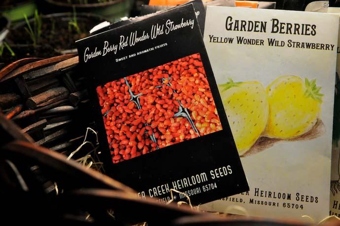 Лучше всего семена земляники купить в специальном магазине