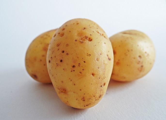 Картофель Даная – cреднеранний универсальный сорт