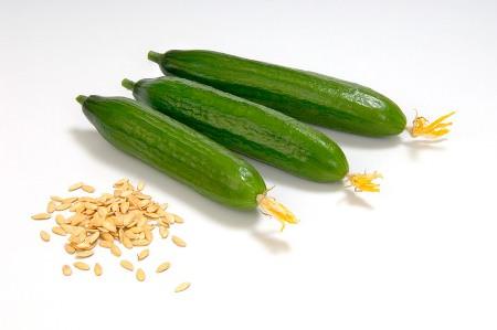Выбрать лучшие для вашего участка семена огурцов не так уж сложно