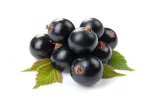 Смородина Черный Жемчуг пользуется спросом у садоводов