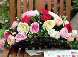 Английские розы – царственные бутоны в облаке аромата