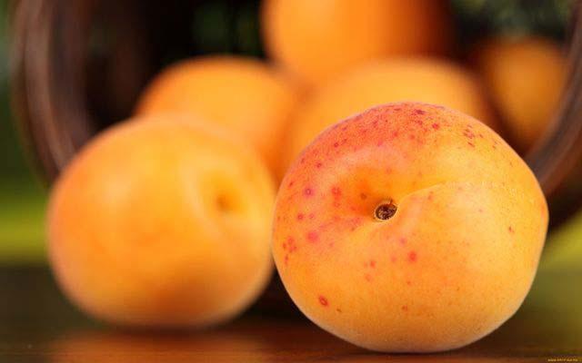 Колоновидные абрикосовые деревья приносят великолепный урожай