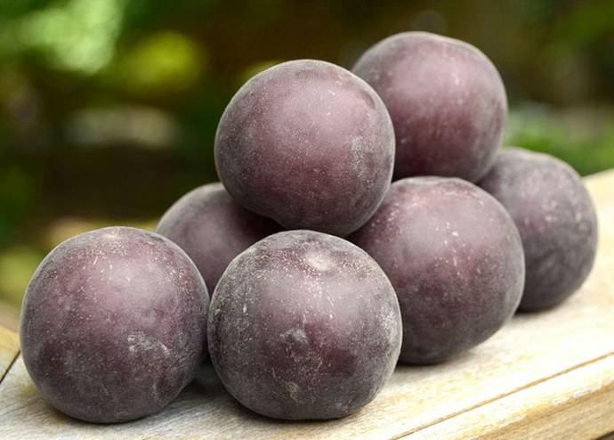 Вкус плодов сорта «Черный принц» ближе к алыче, но с достаточно выраженным абрикосовым ароматом