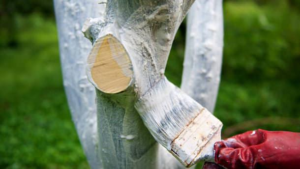 Уход за персиковыми деревьями весной, осенью, в открытом грунте, теплице, как прорастить косточку и