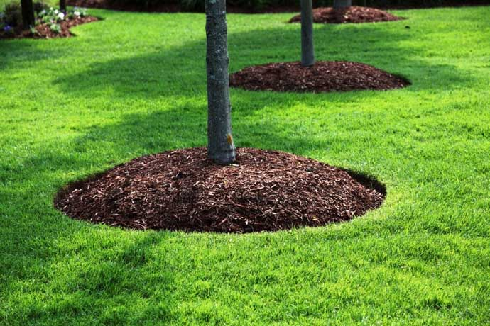 Очень положительно влияет на рост и развитие груши «Тихий Дон» мульчирование грунта в приствольных кругах