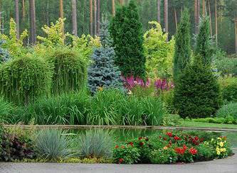 Хвойные деревья очень популярны в ландшафтном дизайне