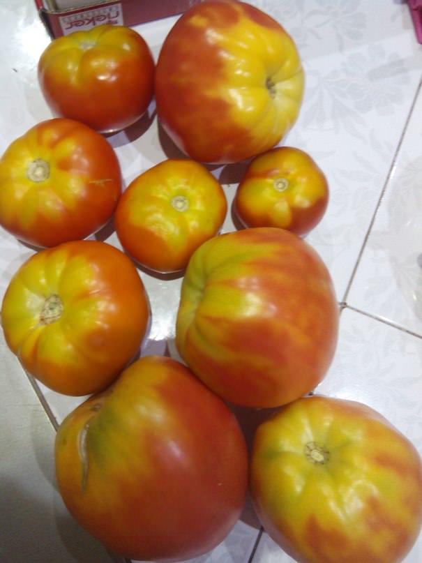 Почему верх помидоры остается желто-зеленым