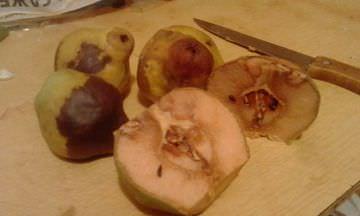 Чем лечить груши и можно ли их есть
