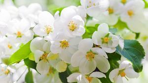 Сорта белых цветов
