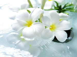 Весенние белые цветы