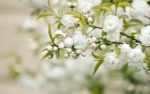 Какие цветы растут в саду
