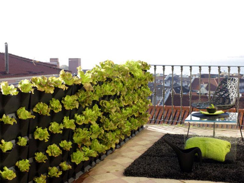 вертикальное озеленение на даче своими руками фото священным