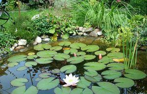 Водные растения для пресного пруда