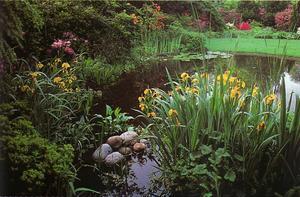Описание водных растений