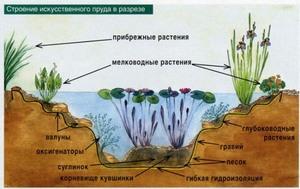 Заселение пруда глубоководными растениями