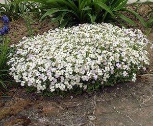 Почвопокровные растения: преимущества