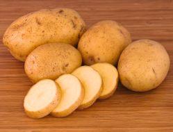 Выращиваем картофель из семян: клубни без вредного наследия
