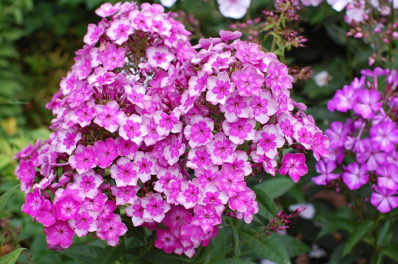 Цветок в горшке на балкон